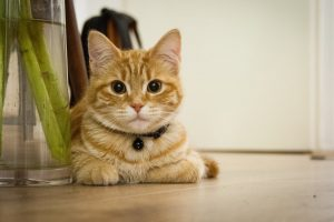 Cute 'n' Funny Cat Videos We Can't Stop Watching