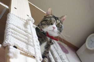 Six Awesome Cat Towers