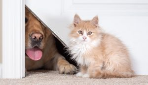Cat Scratching at the Door? Trying to Keep Your Pets Separated