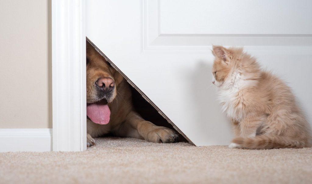 The Kitty Korner Door Solves Both Problems